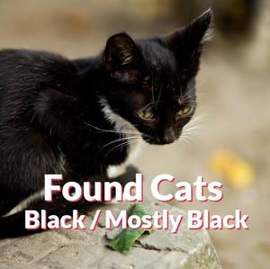 Found Cats - Black