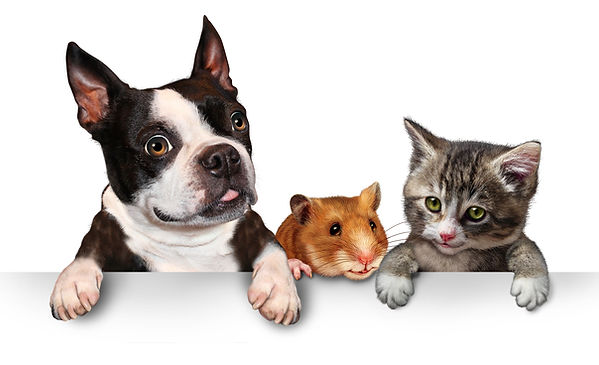 Pets sign for veterinary medicine and pe