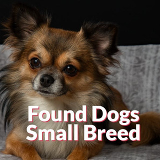 Found Dogs - Small Breeds