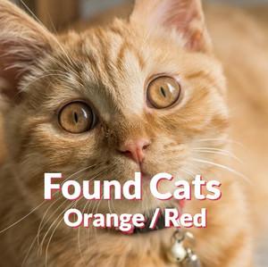 Found Cats - Orange | Red