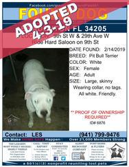 6876 adopted.jpg