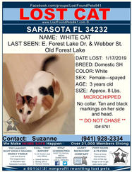 Have you seen White Cat?