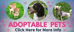 adoptable pets button _edited.jpg
