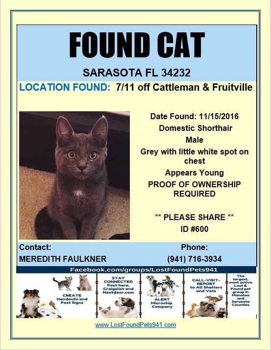 Search Found Cats | Manatee Sarasota County | Lost Pet Services