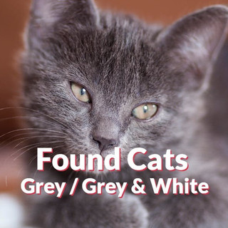 Found Cats - Grey