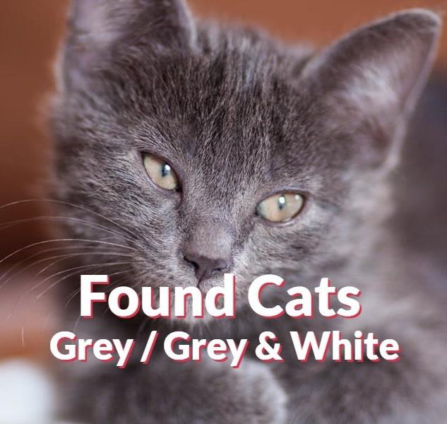 Found Cats - Grey