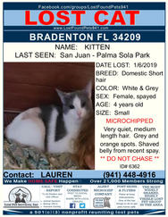 Have you seen Kitten?