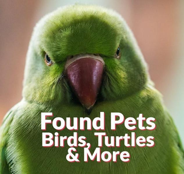 Found Pets - Other Species Exotics