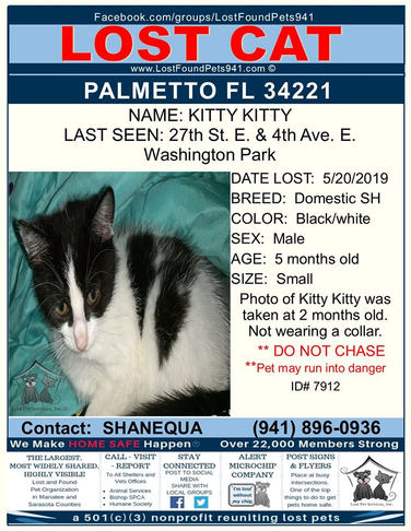 Have you seen Kitty Kitty?   ID# 7912