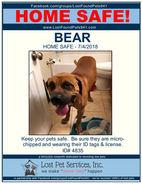 4835 BEAR FOUND DOG.jpg
