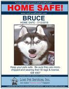 BRUCE HOME SAFE