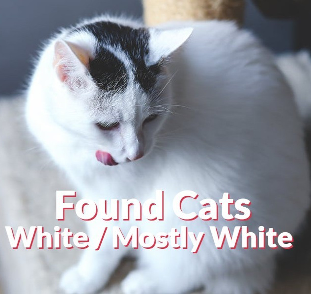 Found Cats - White | Mostly White