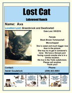 Have you seen Ava?