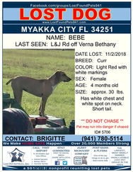 Have you seen Bebe?