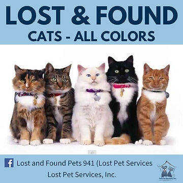 lost cats all colors 2021.jpg