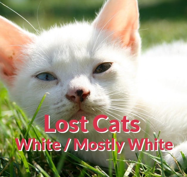Lost Cats - White | Mostly White