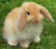 HPRabbit.jpg