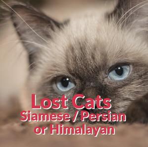 Lost Cats - Siamese | Persian | Himalayan
