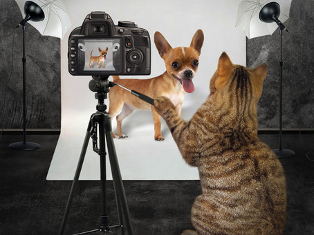 Good Pictures Make Better Lost Pet Flyers - Be Prepared