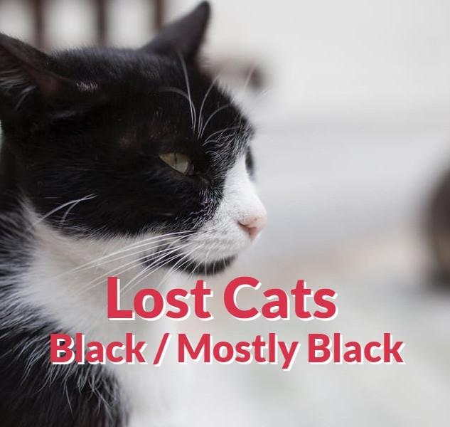 Lost Cats - Black