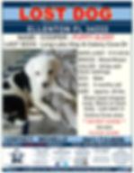 4950 Cooper lost dog FLYER.jpg