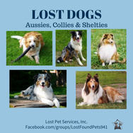 aussies - shelties - collies lost dogs.jpg
