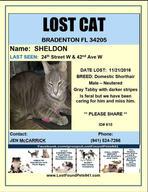 Have you seen Sheldon?