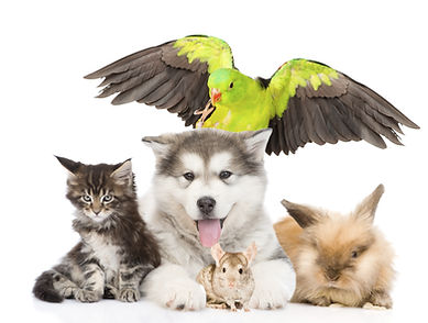 group of pets lying in front. Isolated o