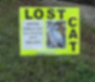 lost cat campaign sign.jpg