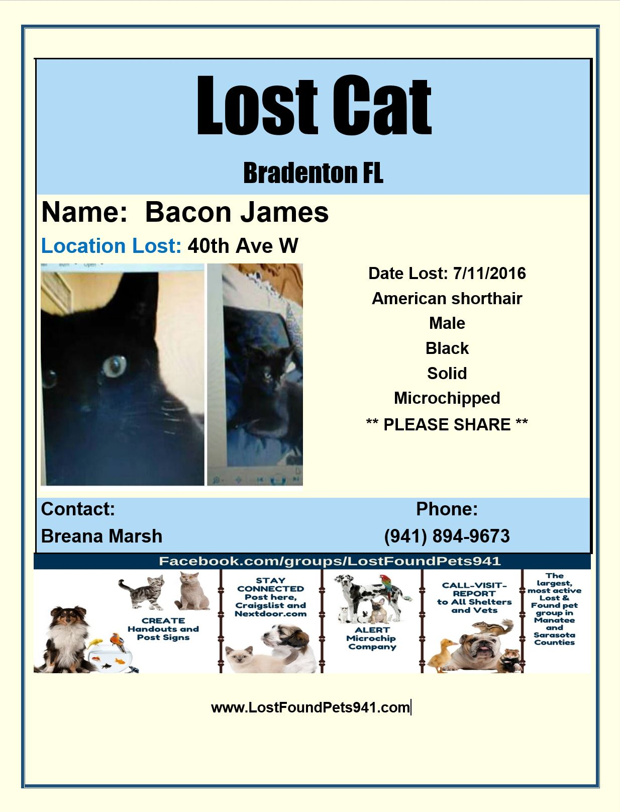 Craigslist Sarasota Bradenton >> Search Lost Cats