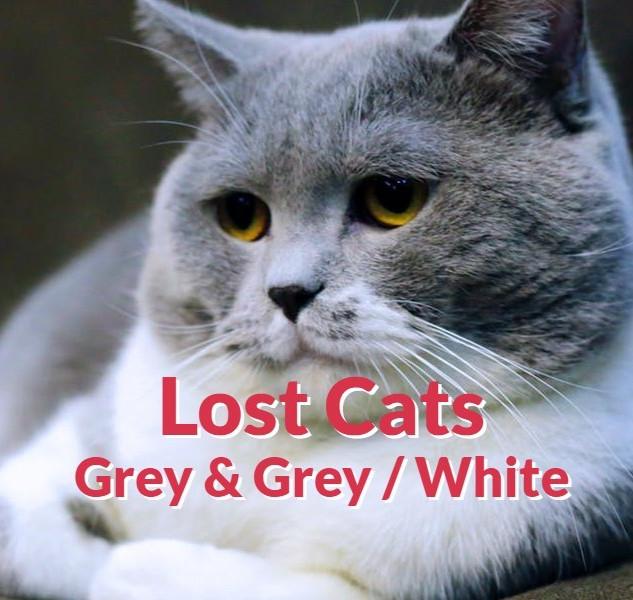 Lost Cats - Grey