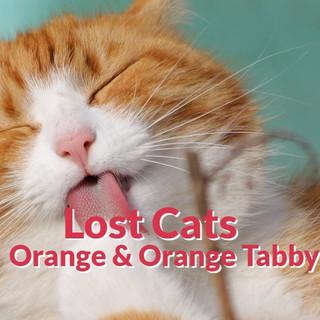 Lost Cats - Orange | Red