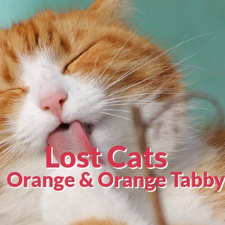 Lost Cats - Orange | Red