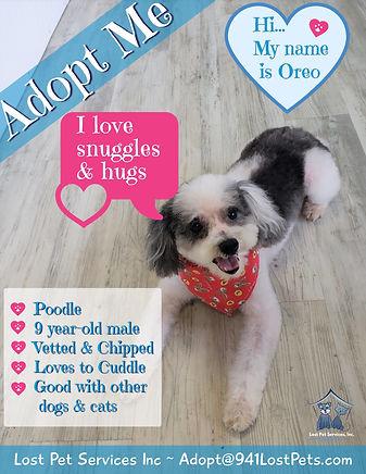 Adoption flyer Oreo.jpg