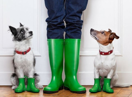 5 Top Tips to Keep Your Pets Safe During Storms & Thunder