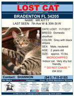 Have you seen Mr. Kitty?