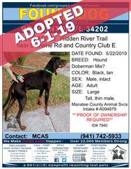 7940 adopted.jpg