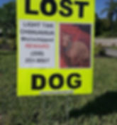 Campaign signs for lost pets signs.jpg