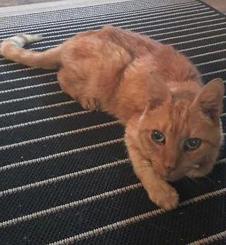 5050 found cat.JPG