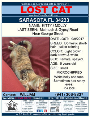 Have you seen Kitty Molly?