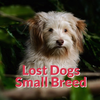 Lost Dogs - Small Breeds