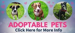 adoptable pets button.jpg