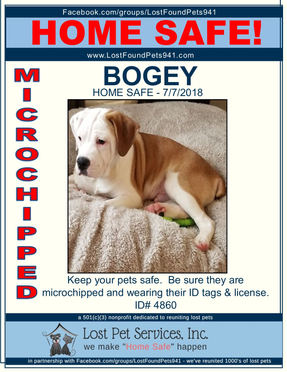 BOGEY HOME SAFE