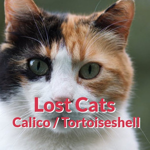 Lost Cats - Calico | Tortoiseshell
