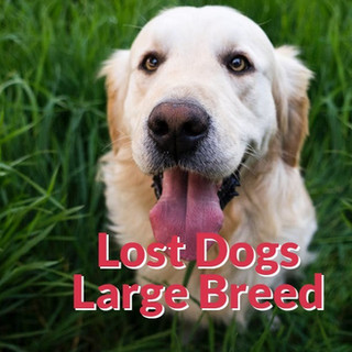 Lost Dogs Large Breeds