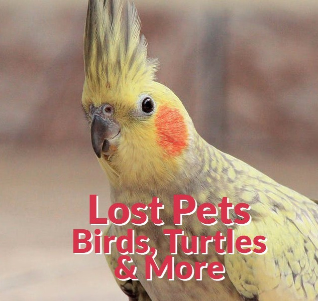 Other Lost Pets