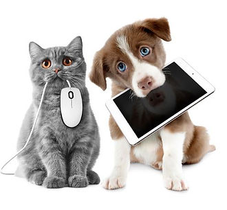 Cat and dog holding ipad and mouse