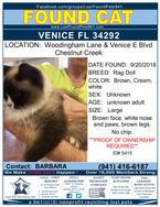 5415 found cat FLYER.jpg