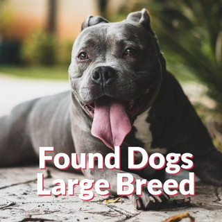 Found Dogs - Large Breeds