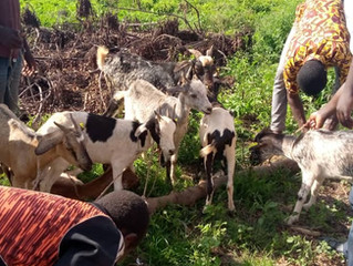 E4L Program supports rural farmers in Karaga District to increase income through livestock rearing